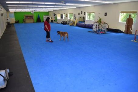Greatmats Dog Agility Mats at Leerburg Dog Training