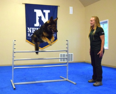 Neuman K9 Academy Dog Jumping Greatmats Dog Agility Floor